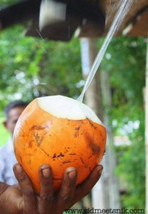 10 vegetarian foods to try in Sri lanka, king coconut water